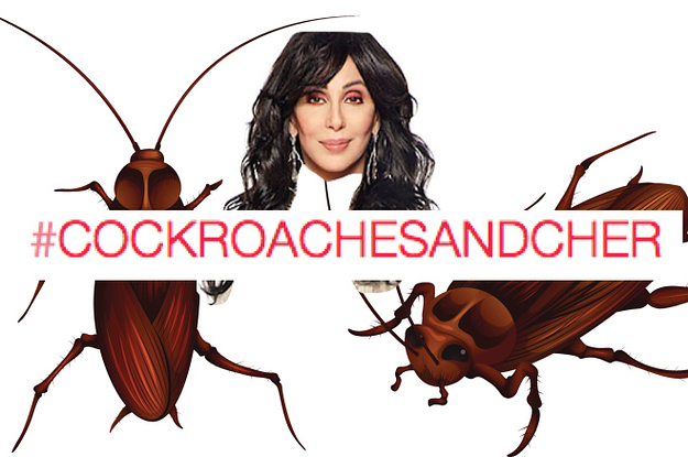 cher-and-cockroaches