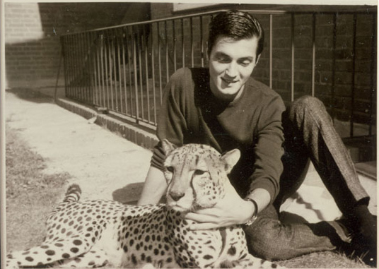 Roy Horn and cheetas 1957