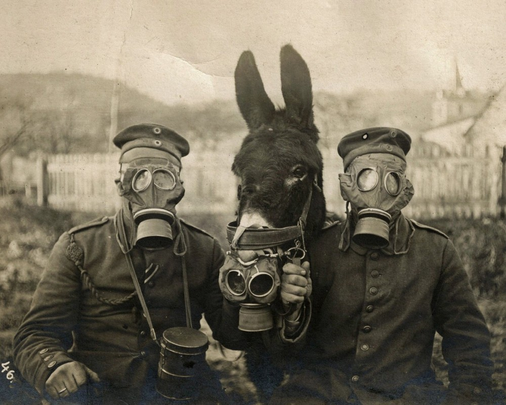 Fritz Haber German soldiers and donkey 1915