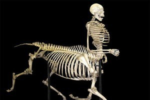 Sagittarius Skeleton